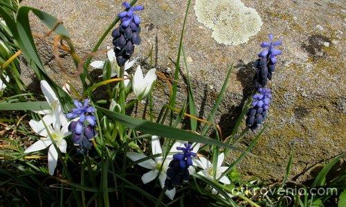 Пролетно пано
