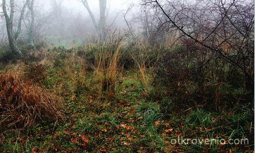 Отвъд - мъгливата гора на нашето аз...