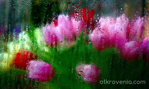 Пролетна фантазия