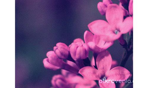 Парченце пролет (С дъх на люляк и любов)