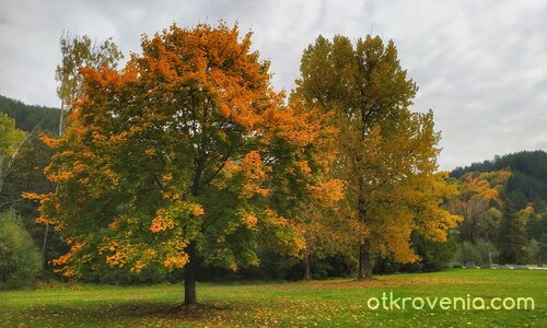 В зелено и оранжево 2
