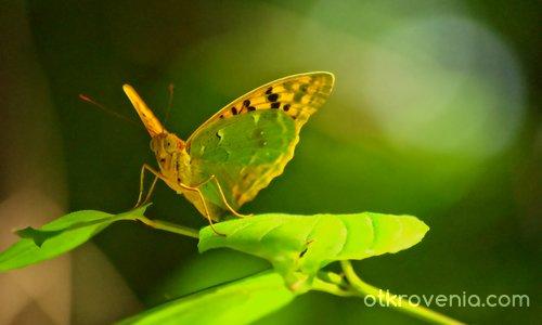 Отражение в зелено