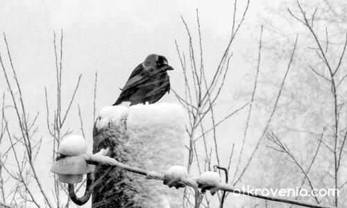 Зимата пее своята песен
