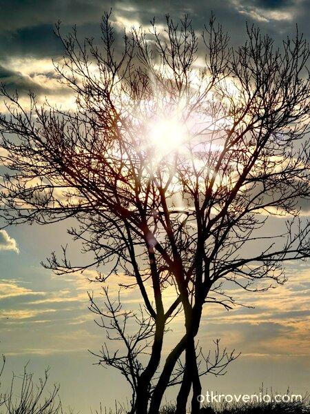 Слънце в короната