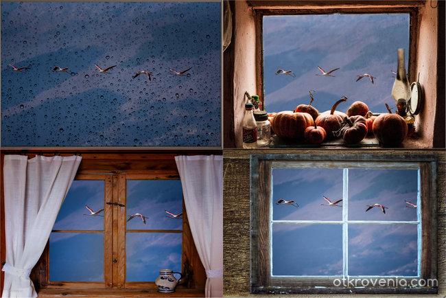 Полетът на фламинго - от различни...прозорци