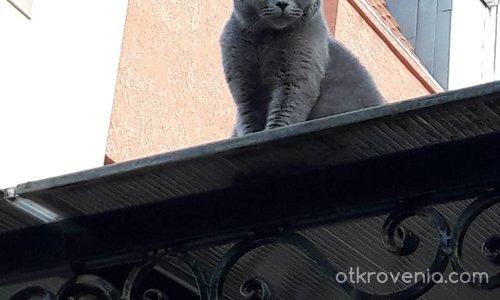 На покрива