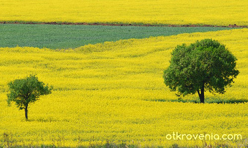 Цветовете на пролетта: Жълто