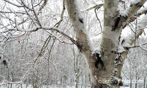 Зима, зад стъклото на прозореца ми...