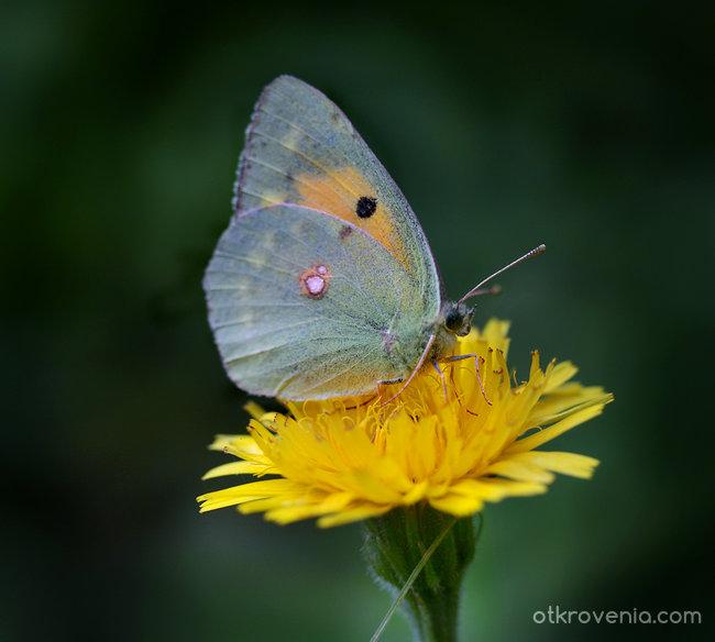 Пеперуден танц