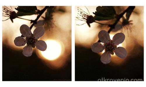 Пролетно затъмнение