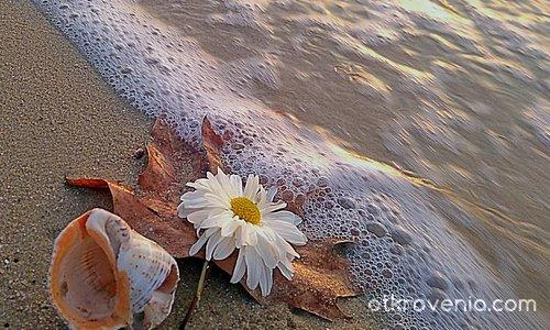 Есенно-морски измислици.
