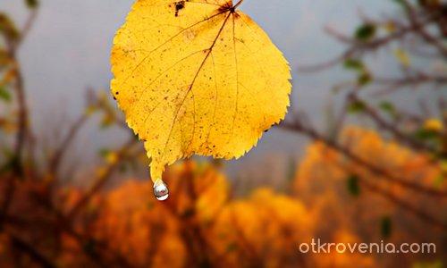 Когато плаче есента