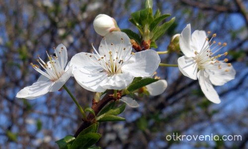 Пролетни усмивки...:)