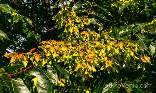 Есенни потпури