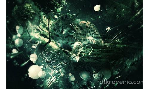 Тайнствата на природата - Рис