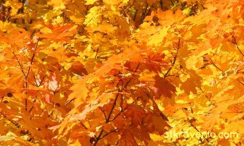 Багрите на есента