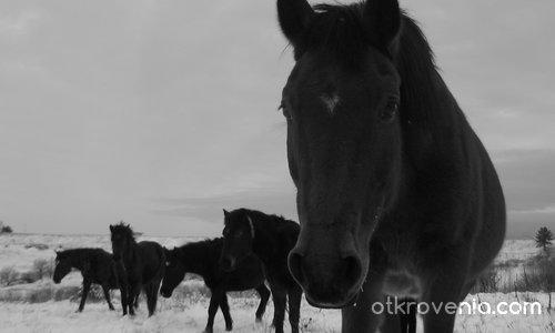 Зимни коне