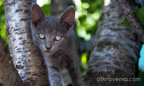 Две хубави (котешки) очи