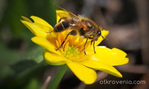 Пчеличко
