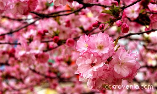 Пролет в изобилие