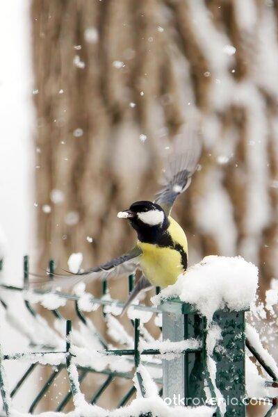Пролетен сняг