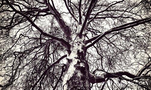 """""""Дърветата са светилища."""""""