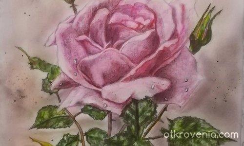 Картина Розова роза