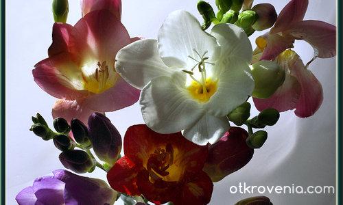 Пролетни ухания - финал