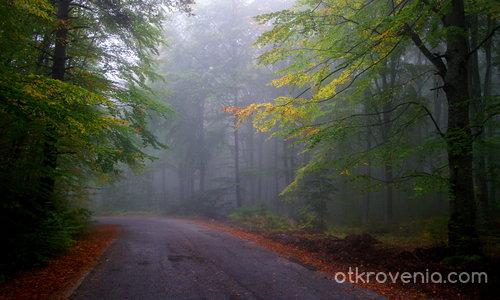Есенни мъгли