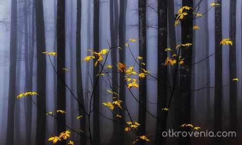 Златна есен весели мъглата