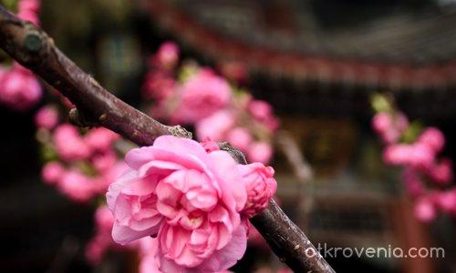 Розова елегантност