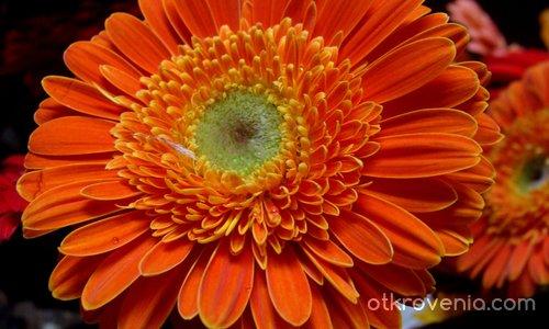 Цвете за Цветята...:)