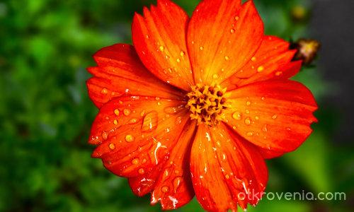 Код оранжево