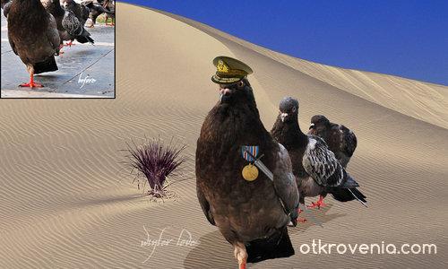 Маршът на гълъбите