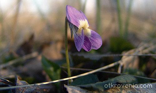 Пролетно ухание!