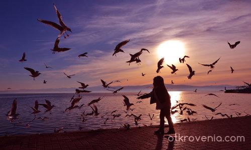 Да храниш птици по залез