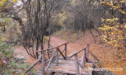 Счупено мостче в гората