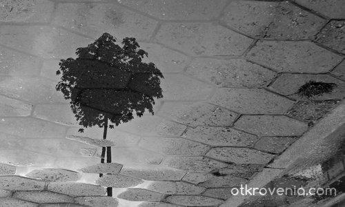 Отразена самота
