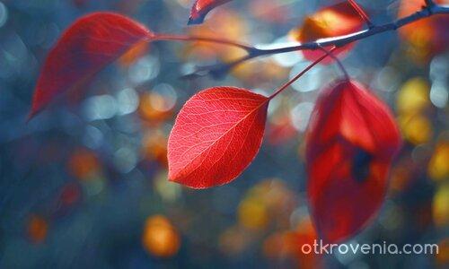 Есенен лист