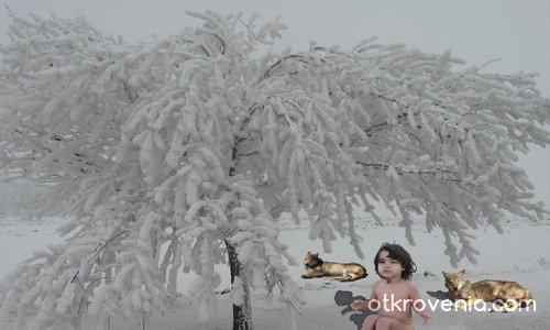 Маугли през зимата