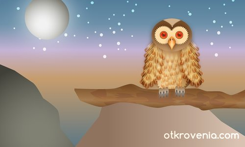 Owl/Бухал