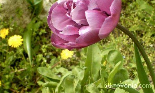 Аз съм само цвят лилав...