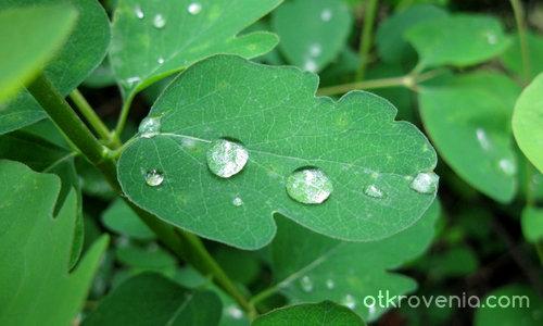 Бисери в дъжда
