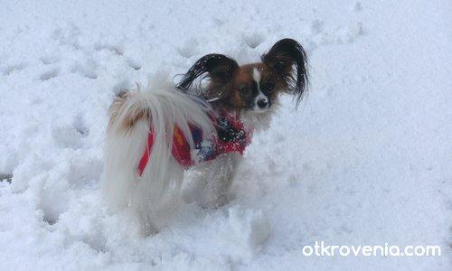 Жасминка и първия сняг