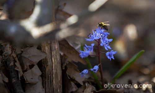 Пролетна хармония