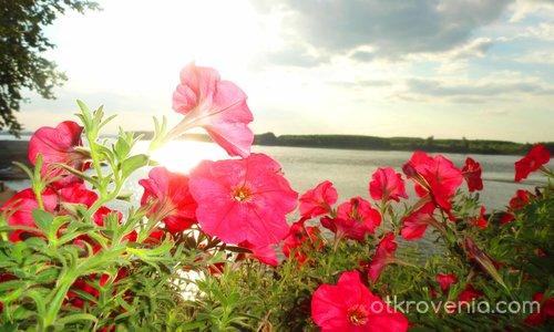 Дунавски розомат