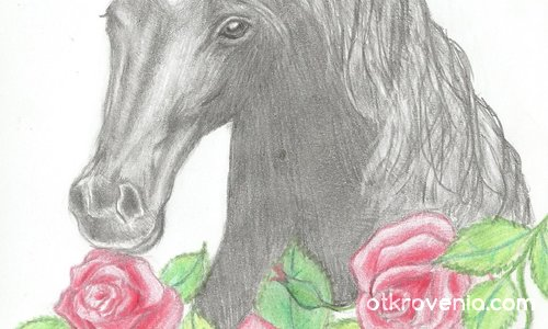 Черен красавец