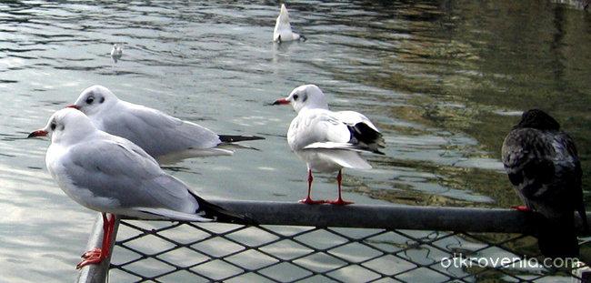 Две влюбени гълъбчета, е да, ама са чайки...