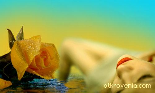 Магията на жълтата роза