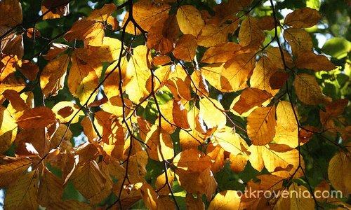 Есенно очарование!